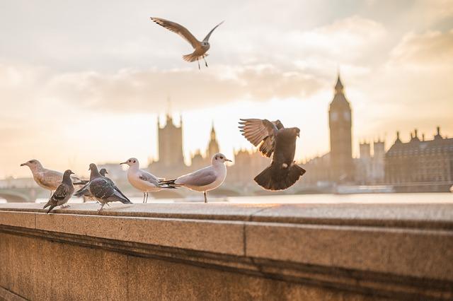 Trasferirsi a Londra: con la famiglia o da soli | The Italian Community